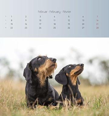 Dackel 2021 - Postkartenkalender 16x17 cm - Dachshunds - zum aufstellen oder aufhängen - Geschenk-Idee - Gadget - Alpha Edition - 2