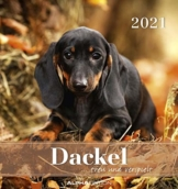 Dackel 2021 - Postkartenkalender 16x17 cm - Dachshunds - zum aufstellen oder aufhängen - Geschenk-Idee - Gadget - Alpha Edition - 1