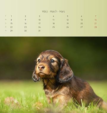 Dackel 2021 - Postkartenkalender 16x17 cm - Dachshunds - zum aufstellen oder aufhängen - Geschenk-Idee - Gadget - Alpha Edition - 5