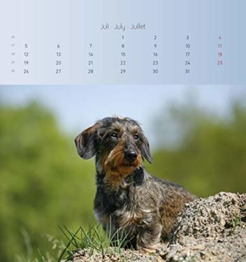Dackel 2021 - Postkartenkalender 16x17 cm - Dachshunds - zum aufstellen oder aufhängen - Geschenk-Idee - Gadget - Alpha Edition - 10