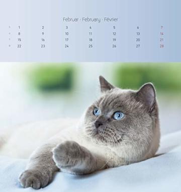 Katzen 2021 - Postkartenkalender 16x17 cm - Cats - zum aufstellen oder aufhängen - Geschenk-Idee - Gadget - Alpha Edition - 2