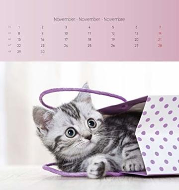 Katzen 2021 - Postkartenkalender 16x17 cm - Cats - zum aufstellen oder aufhängen - Geschenk-Idee - Gadget - Alpha Edition - 12