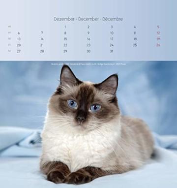 Katzen 2021 - Postkartenkalender 16x17 cm - Cats - zum aufstellen oder aufhängen - Geschenk-Idee - Gadget - Alpha Edition - 13