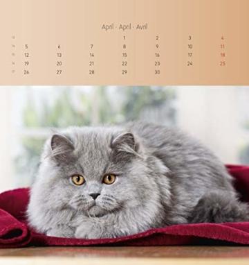 Katzen 2021 - Postkartenkalender 16x17 cm - Cats - zum aufstellen oder aufhängen - Geschenk-Idee - Gadget - Alpha Edition - 3