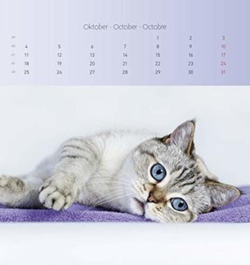 Katzen 2021 - Postkartenkalender 16x17 cm - Cats - zum aufstellen oder aufhängen - Geschenk-Idee - Gadget - Alpha Edition - 4