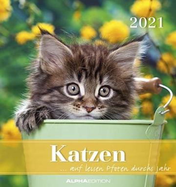 Katzen 2021 - Postkartenkalender 16x17 cm - Cats - zum aufstellen oder aufhängen - Geschenk-Idee - Gadget - Alpha Edition - 1