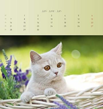 Katzen 2021 - Postkartenkalender 16x17 cm - Cats - zum aufstellen oder aufhängen - Geschenk-Idee - Gadget - Alpha Edition - 5
