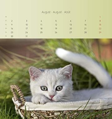 Katzen 2021 - Postkartenkalender 16x17 cm - Cats - zum aufstellen oder aufhängen - Geschenk-Idee - Gadget - Alpha Edition - 6