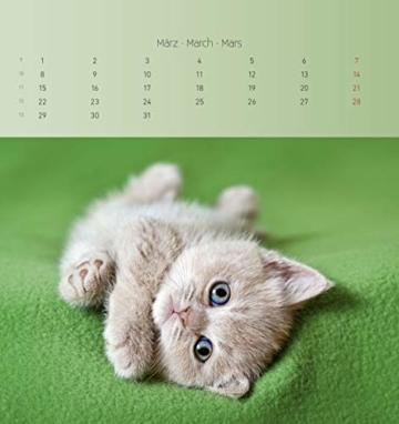 Katzen 2021 - Postkartenkalender 16x17 cm - Cats - zum aufstellen oder aufhängen - Geschenk-Idee - Gadget - Alpha Edition - 7