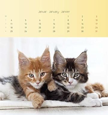 Katzen 2021 - Postkartenkalender 16x17 cm - Cats - zum aufstellen oder aufhängen - Geschenk-Idee - Gadget - Alpha Edition - 8