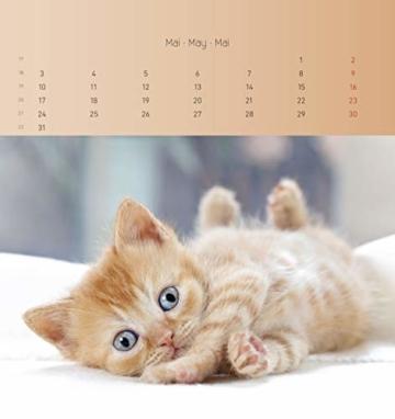 Katzen 2021 - Postkartenkalender 16x17 cm - Cats - zum aufstellen oder aufhängen - Geschenk-Idee - Gadget - Alpha Edition - 9
