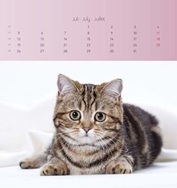 Katzen 2021 - Postkartenkalender 16x17 cm - Cats - zum aufstellen oder aufhängen - Geschenk-Idee - Gadget - Alpha Edition - 10